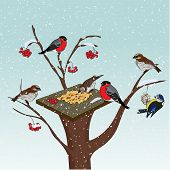 Bird Feeder On A Tree. Cold Winter. Feed The Birds In The Cold. Bullfinches And Tit With A Feeder On poster