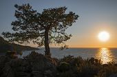 Beautiful Sunset Over The Sea With A View At Lonely Tree On The Edge Of The Rocky Cliff. Big Sun Ove poster