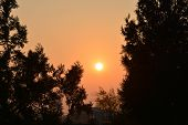Beautiful Orange Sundown Above Trees. Orange Sky poster