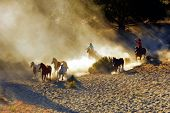 stock photo of wrangler  - Wranglers chasing wild horses in early morning light with dust flying everywhere - JPG