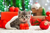 Christmas Presents Concept. Christmas Cat With Funny Face In Santa Claus Hat Holding Gift Box Under  poster