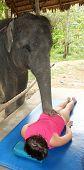 Elephant Massage, A Tourist Getting Elephant Massage, Phuket, Thailand poster