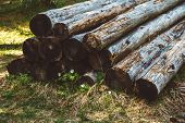 Old Cut Trunks On A Pile. Detail View A Big Pile Of Trunks, Trees. Closeup Of Wooden Trunks poster