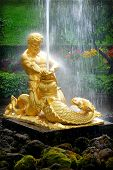 pic of samson  - PETERHOF - JPG