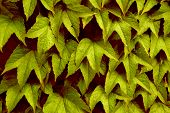 Summer Or Autumn Leaves? poster