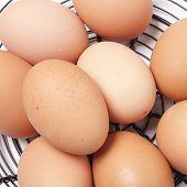 foto of chicken-wire  - Free range eggs in wire basket with white background - JPG