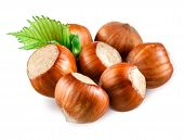 picture of hazelnut  - Hazelnut - JPG