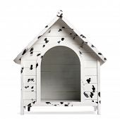 picture of spotted dog  - Dog kennel - JPG