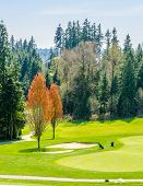 Golf course with gorgeous green.