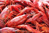 picture of crawfish  - boiled crawfish clayfish party - JPG