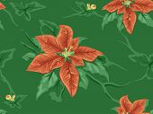 foto of poinsettia  - Seamless Background Featuring Poinsettia Patterns - JPG