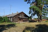pic of wooden shack  - Old wooden hut near the big pine tree  - JPG