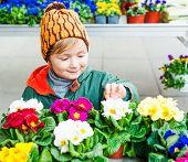 image of flower shop  - Cute little boy choosing flowers in flower shop - JPG