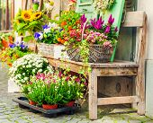 image of flower shop  - Old bench full of flowers next to flower shop - JPG