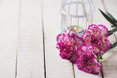 pic of carnations  - Background with fresh carnations flowers - JPG