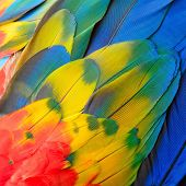 image of feathers  - Beautiful bird feathers Scarlet Macaw feathers pattern background - JPG