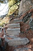 image of pine-needle  - old concrete staircase strewn with pine needles - JPG