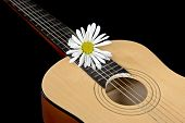 image of six-petaled  - Single white daisy on a six string acoustical guitar - JPG