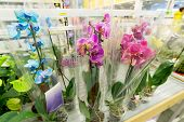 pic of flower shop  - A beautiful colorful flowers in flower shop - JPG