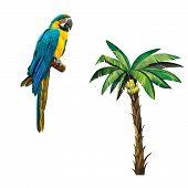 picture of banana tree  - Banana Palm plant tree isolated - JPG
