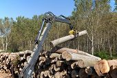 image of skidder  - Crane with jaws loading logs onto a stack - JPG