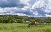 picture of pastures  - Solitary horse grazing in a remote village pasture with no people as storm clouds gather overhead - JPG