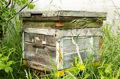 pic of beehive  - Single Russian wooden beehive in a village garden - JPG