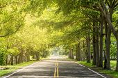 foto of tree lined street  - Landscape of straight road under the trees - JPG