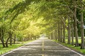 picture of tree lined street  - Landscape of straight road under the trees - JPG
