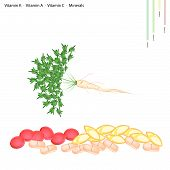 pic of parsnips  - Healthcare Concept Illustration of Parsley or Parsnip with Root with Vitamin C Vitamin A Vitamin C and Minerals Tablet Essential Nutrient for Life - JPG