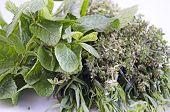 image of bundle  - Herbal bundle made of mint thyme and tarragon - JPG
