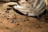 foto of ant-eater  - Termite on soil floor and dry leaf [[** Note: Visible grain at 100%, best at smaller sizes ** Note: Shallow depth of field - JPG