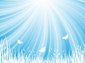 pic of blue butterfly  - The abstract blue natural background. Vector  illustration. - JPG