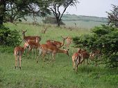 picture of s10  - dis was clicked in masai marakenya using nikon coolpix s10
