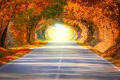 Autumn Fall Road landscape - Real trees tunnel and magic light,  beautiful autumnal colors poster
