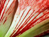 stock photo of belladonna  - Series of the texture  - JPG
