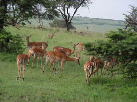 picture of s10  - dis was clicked in masai marakenya using nikon coolpix s10  - JPG