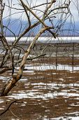 Bare Willow Branches With Water Drops Against Wooden Poles In Blurry Lake Kerkini Wetlands And Low C poster