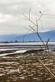 Bare Willow Branches Against Blurry Lake Kerkini Wetlands Background With A Mountain Range And Low C poster