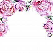 Delicate Pink Rose. Floral Botanical Flower. Frame Border Ornament Square.aquarelle Wildflower For B poster