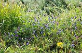 Summer View Of Blooming Wild Flowers In Meadow.  Wild Flowers And Grass In A Meadow Nature. poster