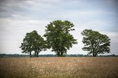 Views Over A Natural Pasture With Grasses, Wild Flowers And Natural Vegetation. On The Horizon Large poster