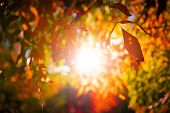 A Gorgeous Sunbeam Through The Autumn Tree Leaves Branches In The Forest poster