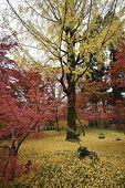 Autumn Colors In Eikando Temple Kyoto, Japan. Eikando Is A Temple Famous For Brilliant Foliage In Th poster