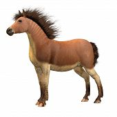 Equus Scotti Horse 3d Illustration - This Primitive Horse Lived In North America During The Pleistoc poster
