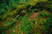 Beautiful Taiga Background With Rich Flora On Mossy Streep Slope. Fresh Greenery Among Thick Mosses  poster
