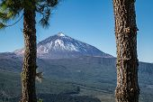 Peak Of Mount Teide Seen Through Pine Trees From Mirador De Chipeque - One Of The Viewpoints Along T poster