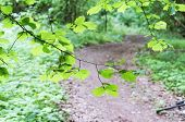 Forest Path, Spring Forest And Path Summer poster
