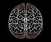 Vector Outline Illustration Of Human Brain On Black Background. Cerebral Hemispheres, .convolutions  poster