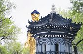 A Gold Standing Buddha Statue On A Sunny Spring Day At Jile Temple, Temple Of Bliss,  In Harbin Chin poster